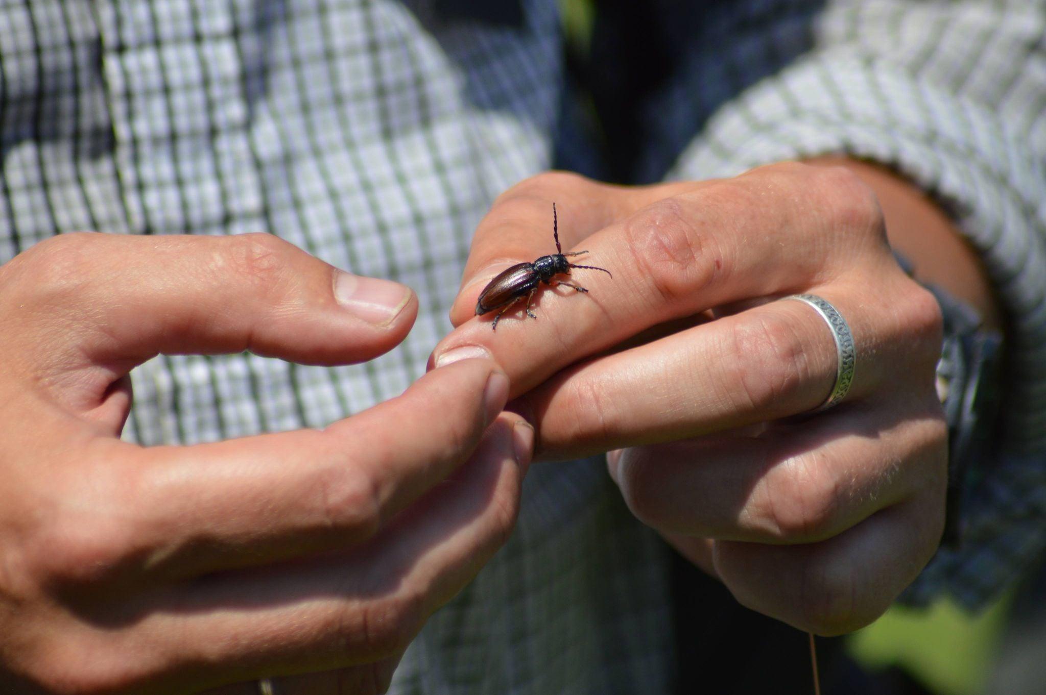 A new species for GBIF (Photo: UNCG)